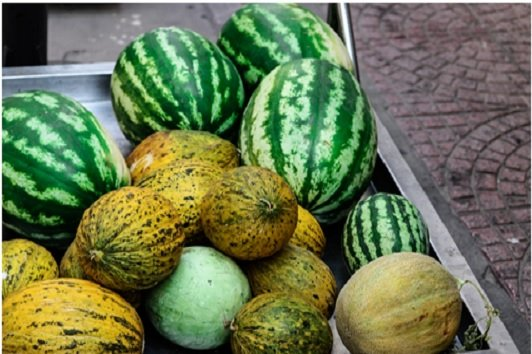 Melons & Gourds